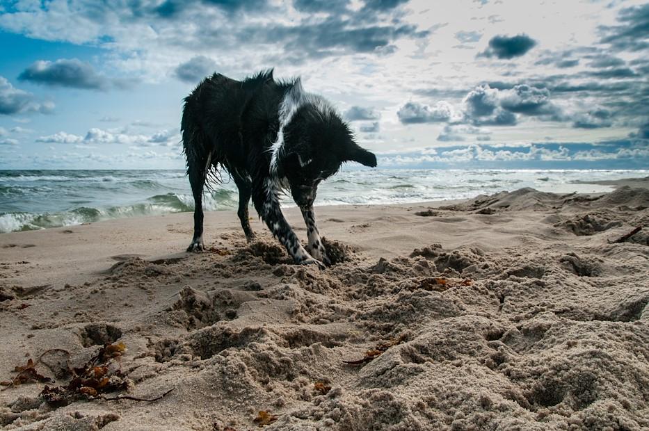Dog Days of Summer Weekend